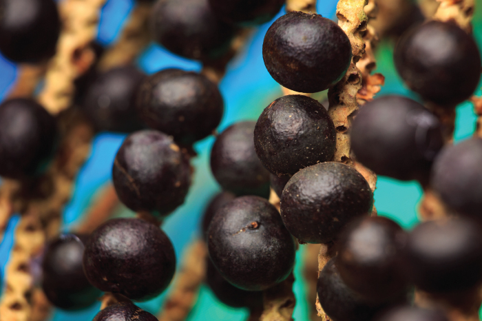antioxidante-acai-mulheres